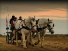 chevaux-chevrieres-60